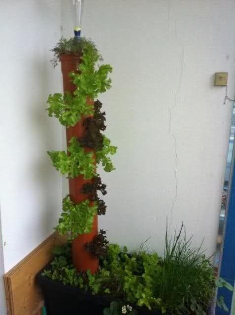 Der Salatbaum oder Salatturm   Ideen für den Garten ...