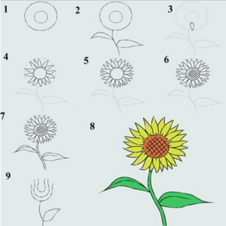 Gambar Arsiran Bunga Yang Mudah Cara Mudah Belajar Menggambar Beserta Langkah Langkahnya Ragam Sketsa Menggambar Bunga Matahari Gambar Bunga Lukisan Bunga