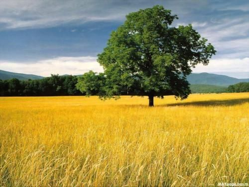 tall grass field forest lay down in field of tall grass so no one can see me bucket list