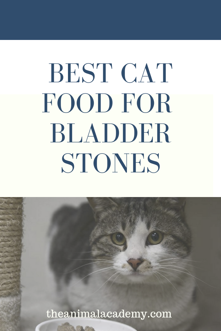 Best Cat Food for Bladder Stones (With images) Best cat