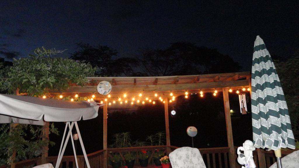 Shop The Look Stargazer Cascade Branch Christmas Tree Lighting Branch Decor Holiday Lights