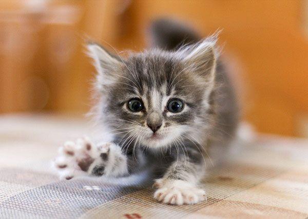 cute fluffy kitten stretching paw | Cute & Fuzzy ...