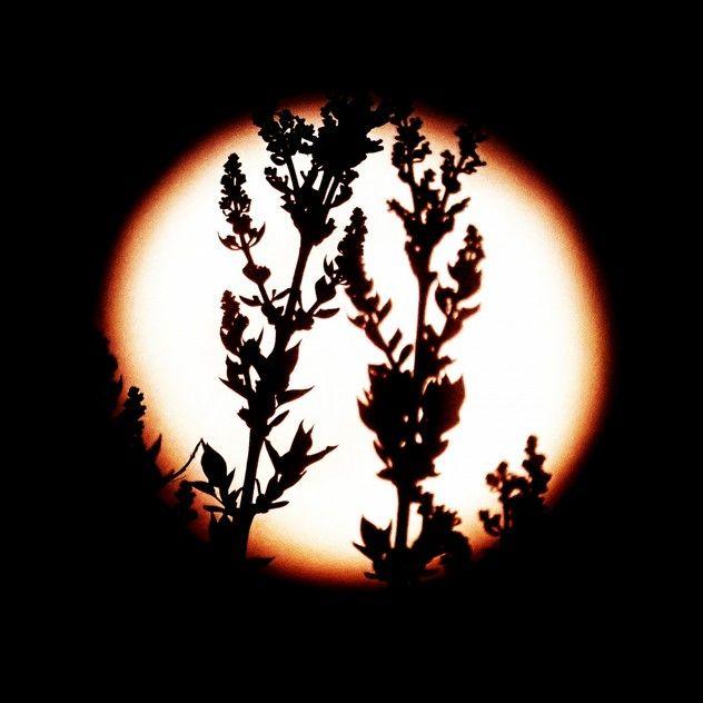 Vollmond Sommersonnenwende