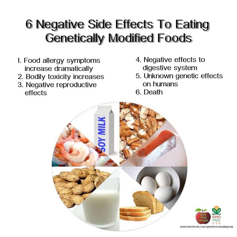 genetically modified food articles for students