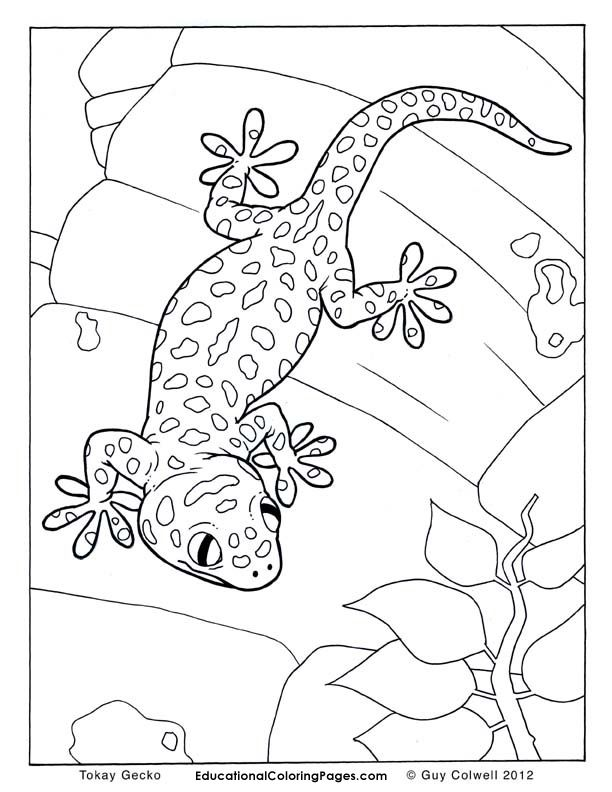 Tokay Gecko Snake Coloring Pages Animal Coloring Pages Cute