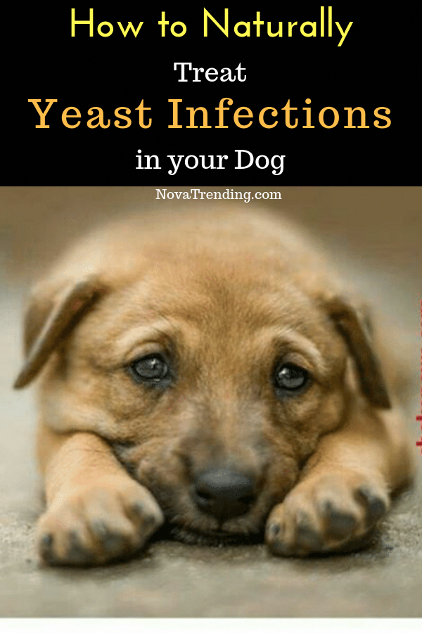 How to Naturally Treat Yeast Infections in Dogs