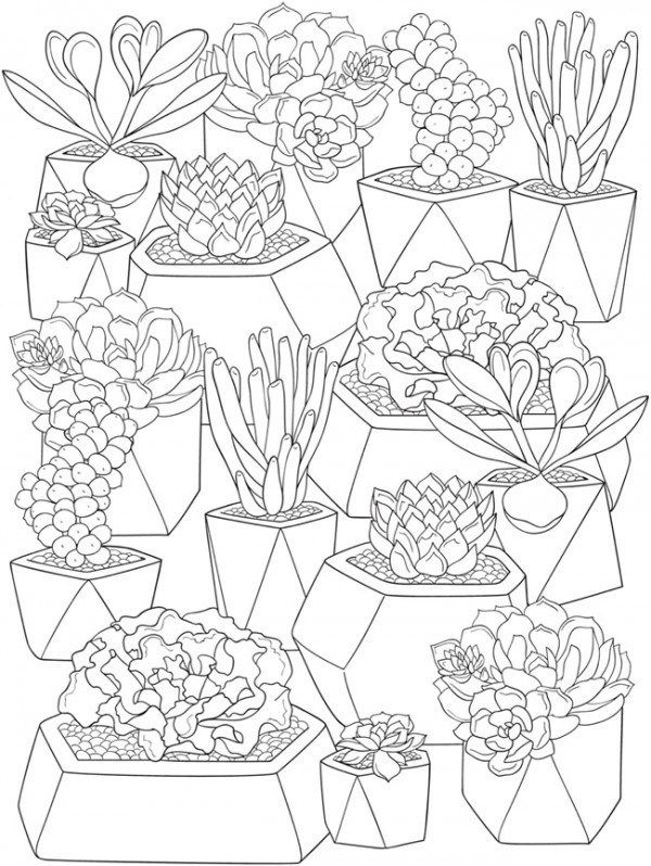 6 Succulents Coloring Pages