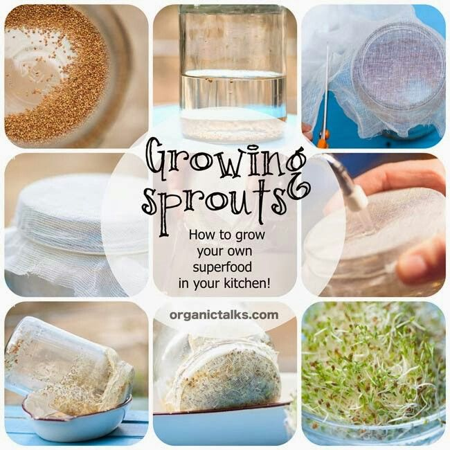 Your own sprouts