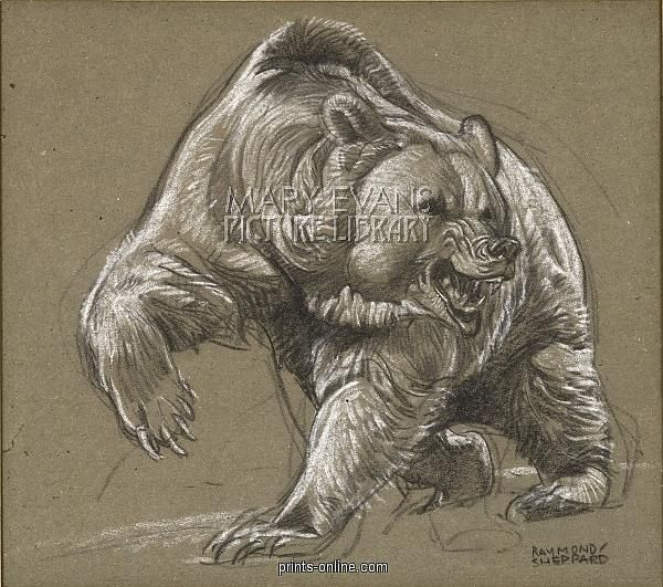 Grizzly Bear Angry Forest Animals | Bear tattoos, Grizzly ...