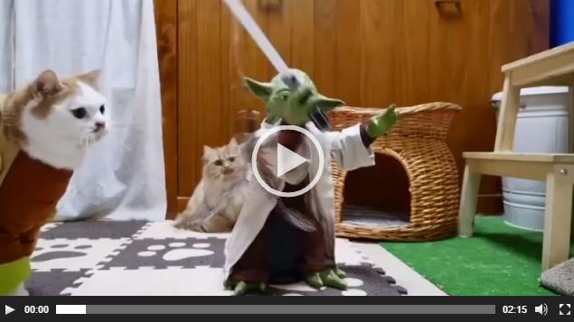Star Wars'un sevilen karakteri Yoda, kedilere ışın kılıcı dersi verdi. Star Wars serisinin yeni flmi olan 'The Force Awakens'in vizyona girmesiyle birlikte filmin hayranları da sosyal medyaya ilginç videolar yüklemeye devam ediyor. Maker World isimli Facebook sayfasından yüklenen videoda Yoda oyuncağının, etrafında bulunan kedilere ışın kılıcı dersi verdiği görülüyor.