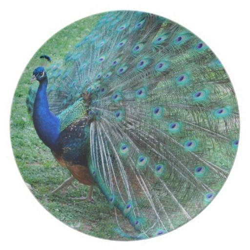 Graceful peacock paradisiac bird dinner plates