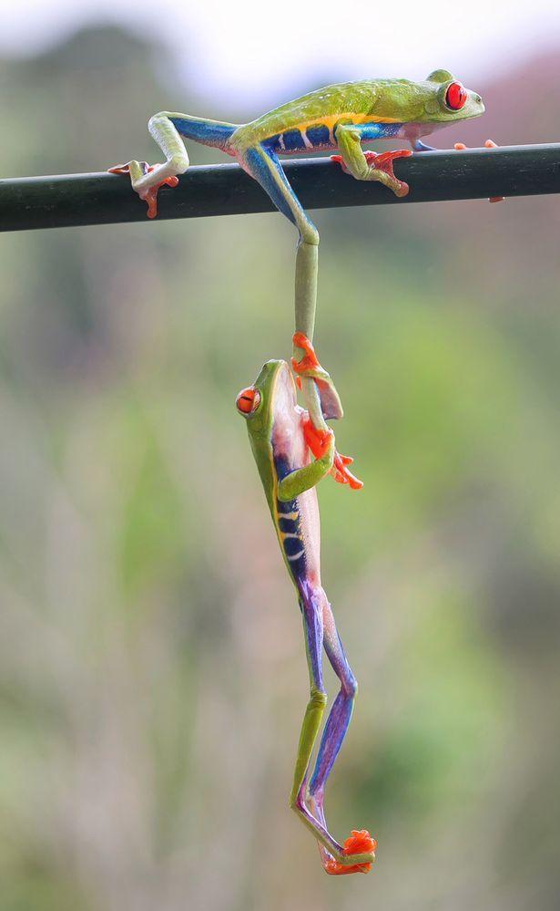 Tree Frog on a Leaf Branch Gym Bag