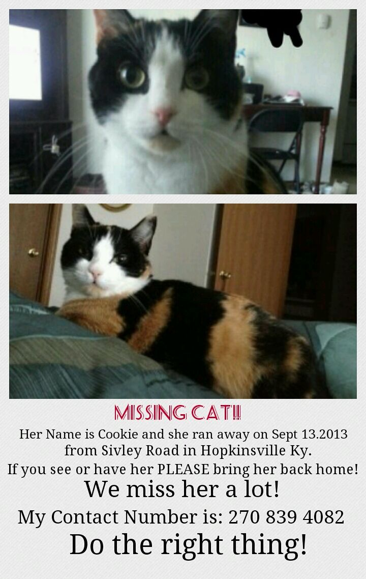 Please Help Us Find Her Lost Cat Cat Usa Cats