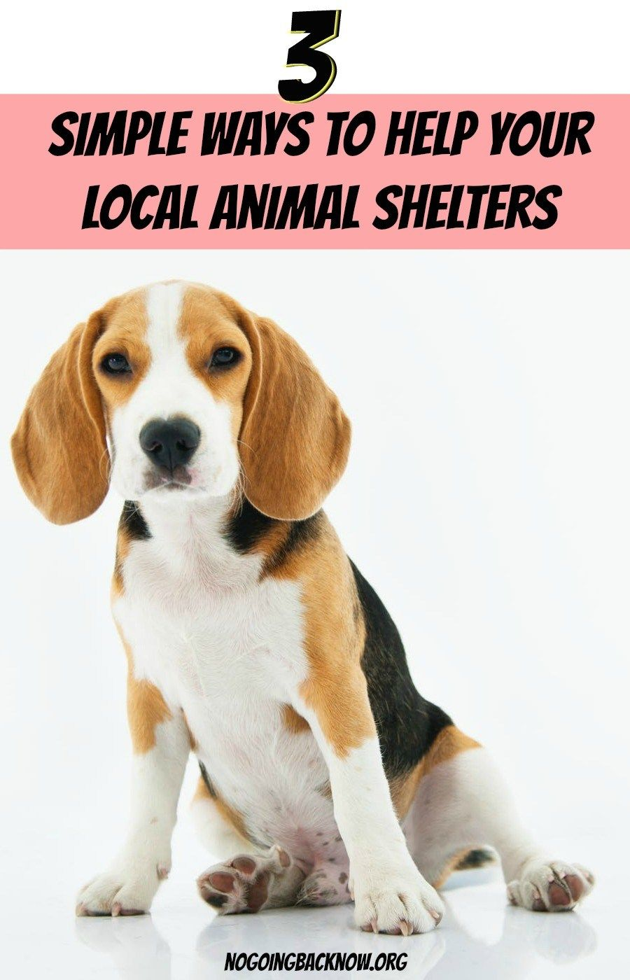 Rescue Life 3 Simple Ways To Help Homeless Animals In Your City