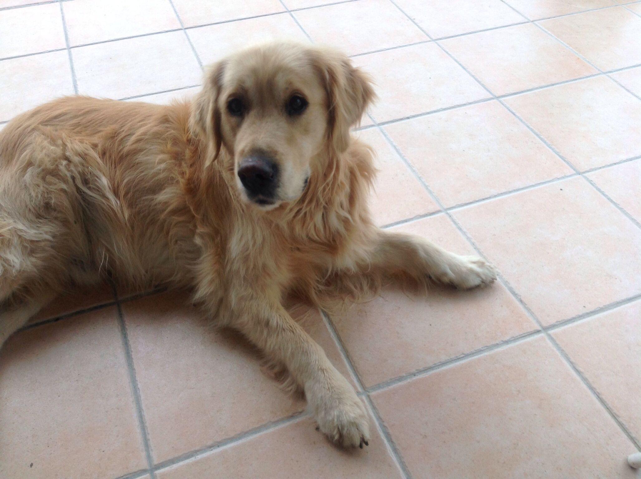My fluffy dog Rusty.