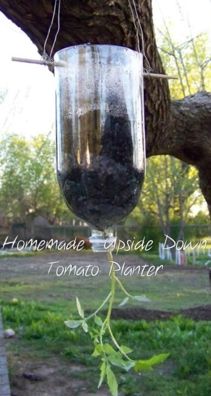 Como plantar tomates en botellas de plástico14