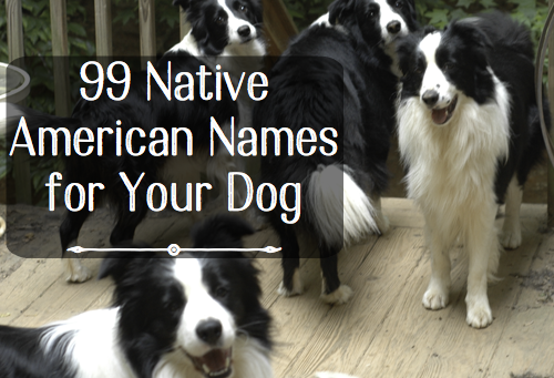 99 Native American Names For Male Dogs Dog Names Dog Names Male