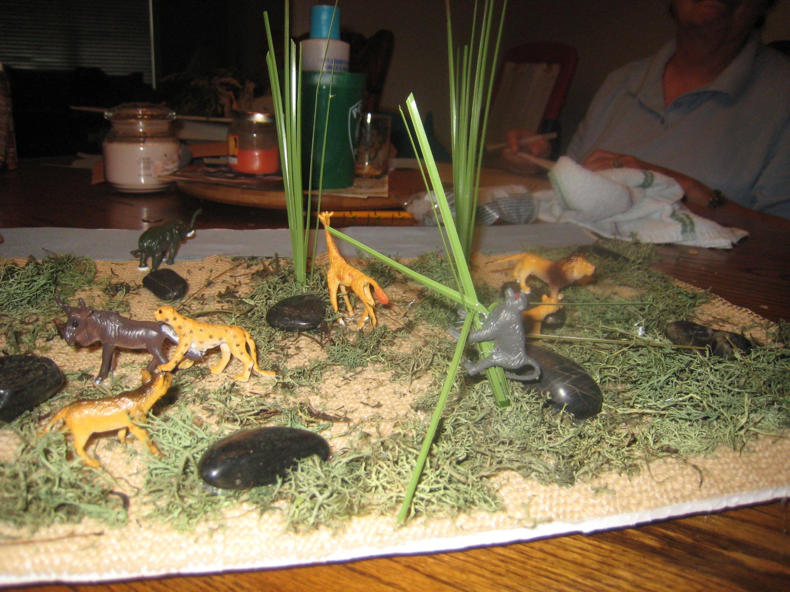 Savannah Habitat