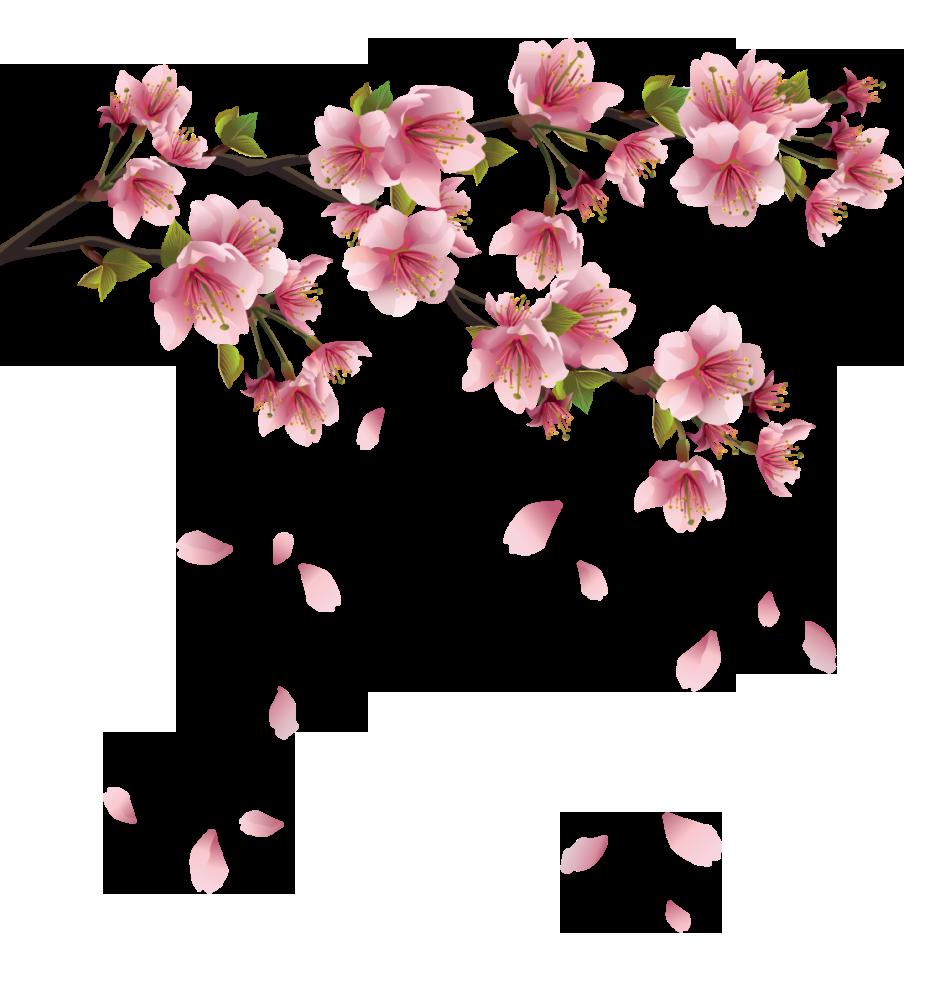 Resultado De Imagen Para Gifs Animados Flores De Novia Falling Background Transp Flor De Cerejeira Arte Tatuagem De Flor De Cerejeira Flor De Cerejeira Pintura