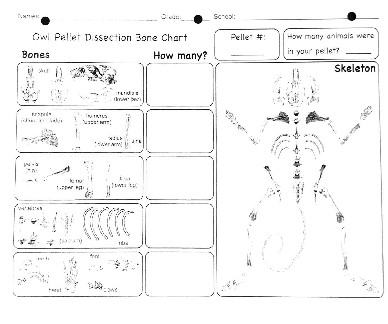 29++ Best owl pellet worksheet Useful