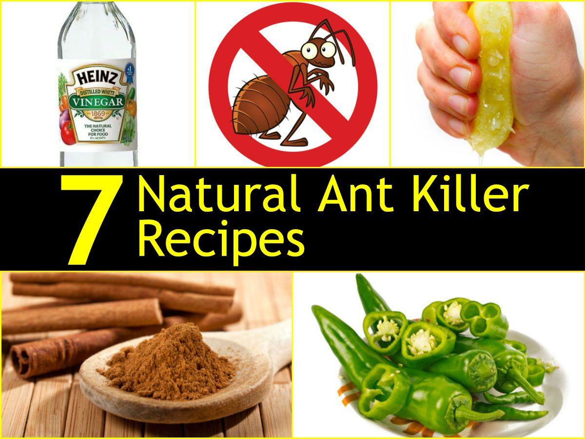 8 natural ant remedies how to get rid of ants pest insects begone ant killer recipe. Black Bedroom Furniture Sets. Home Design Ideas
