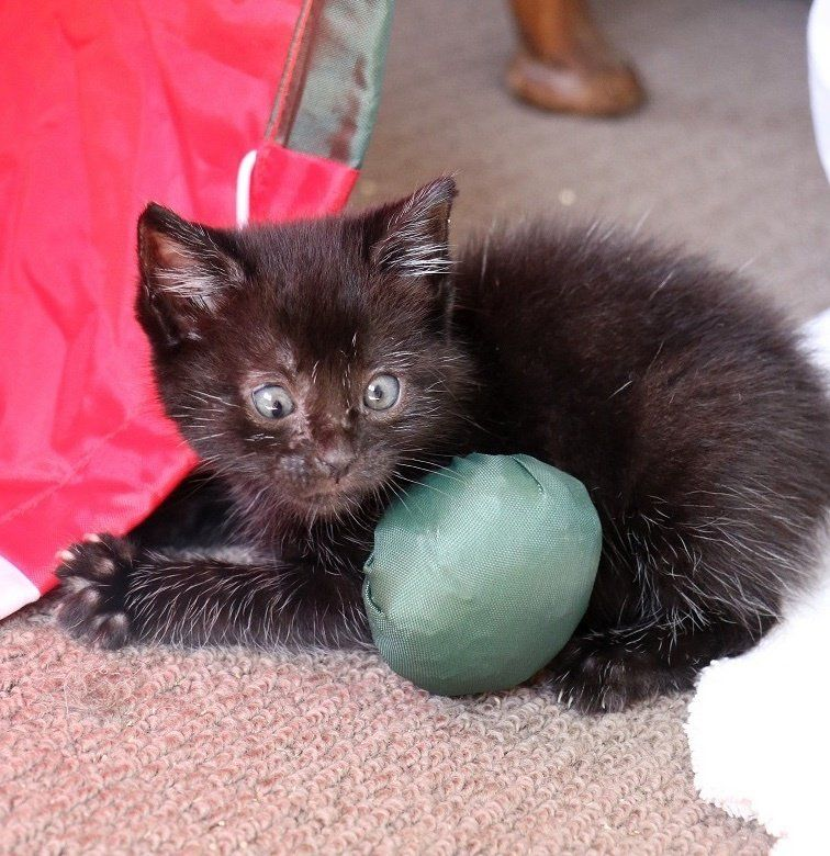 Kitten Found In Garden Gets Help To See Again And Reveals Her Adorable Crossed Eyes Kittens Tiny Kitten Kitty
