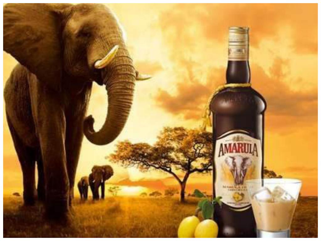 Amarula o licor de origem Africana feito da fruta Marula | Amarula, Africana, Viagens