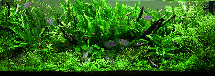 The Jungle Style Aquarium Aquascaping Love Planted Aquarium Aquascape Aquarium Aquascape
