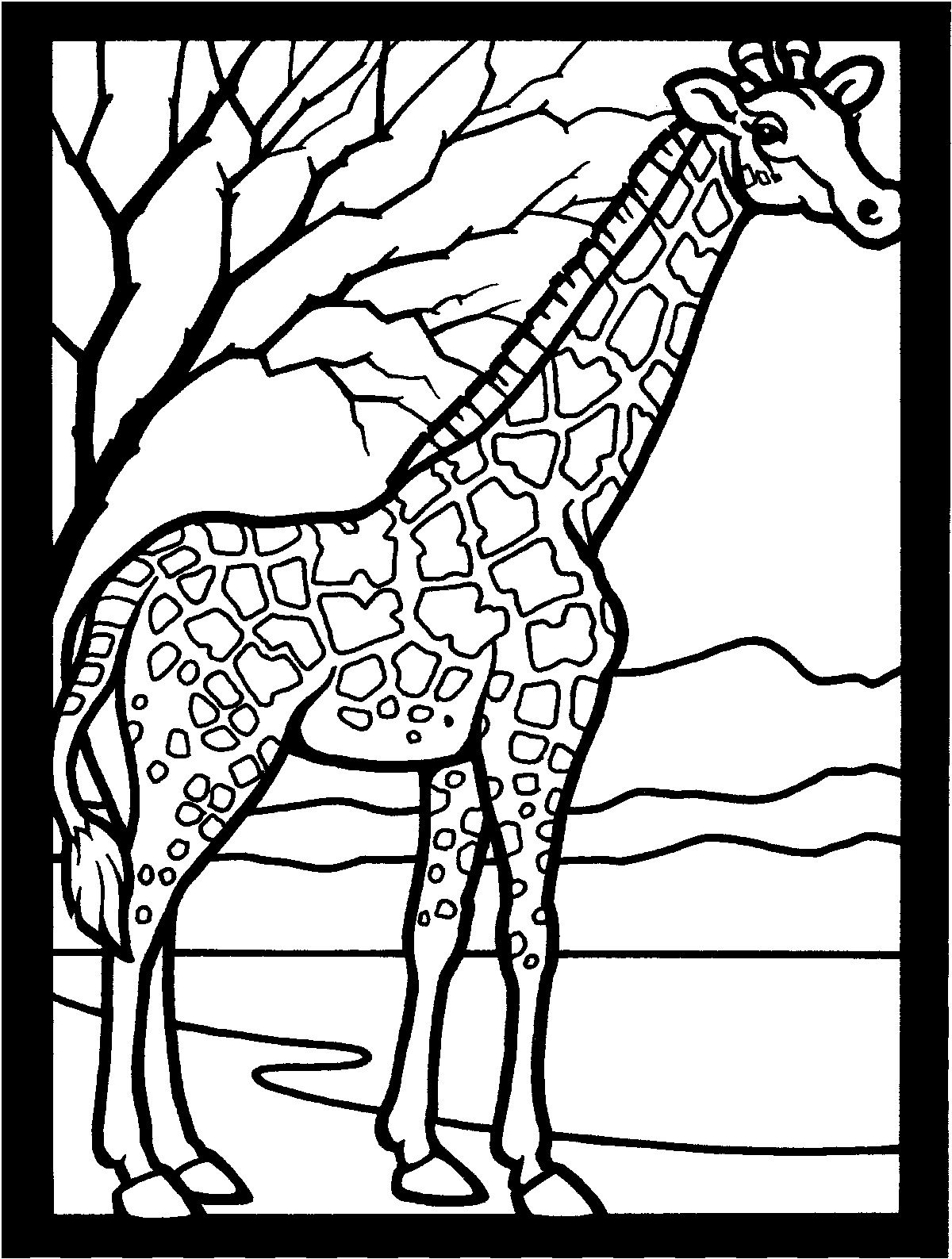 Free Printable Giraffe Coloring Pages For Kids Animal Coloring Pages Giraffe Coloring Pages Giraffe Colors