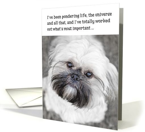 Funny Birthday Card Shih Tzu Pondering Life And The