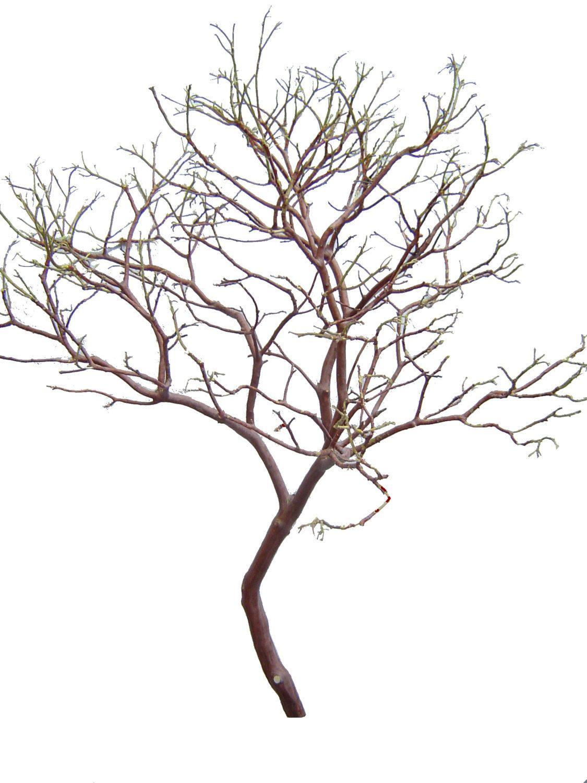 Manzanita Branch 27\