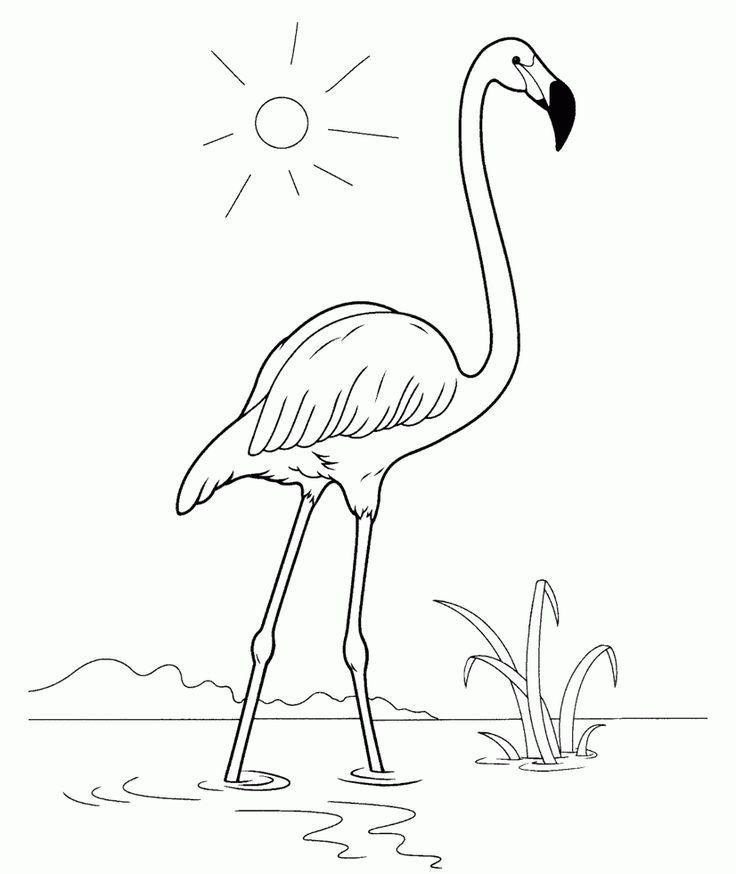 Flamingo Malvorlage