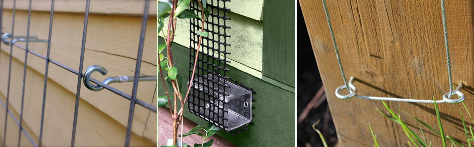 Вьющиеся растения лианы: фото и видео диких лиан. » Дикая граница | 500x1608