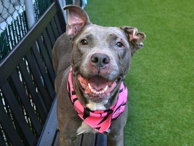 KEYS - 33875   Animals, Nyc dogs, Animal shelter
