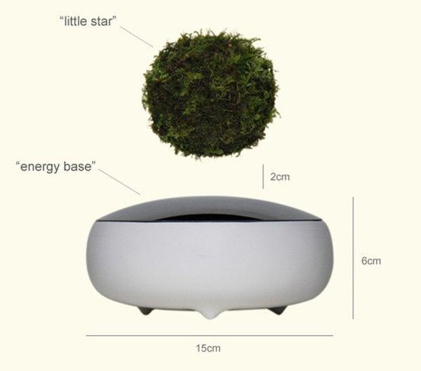 Hoshinchu Air Bonsai Garden Defies Gravity Bonsai Styles Bonsai Garden Bonsai