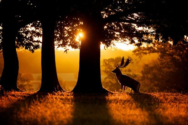 Sunrise - Deer Photos by Mark Bridger  <3 <3