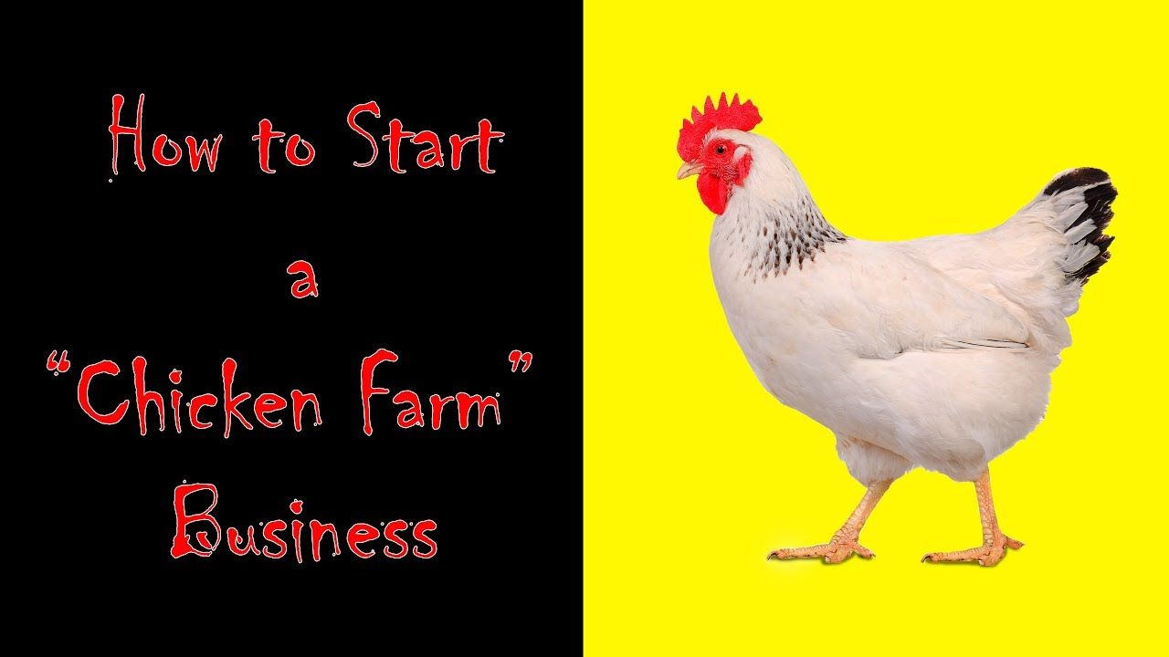 How To Start Chicken Farm Business Poultry Business