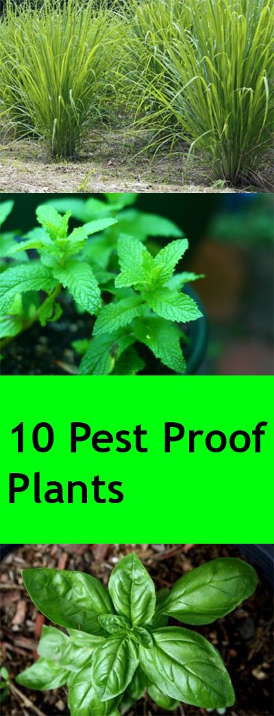 10 Pest Proof Plants