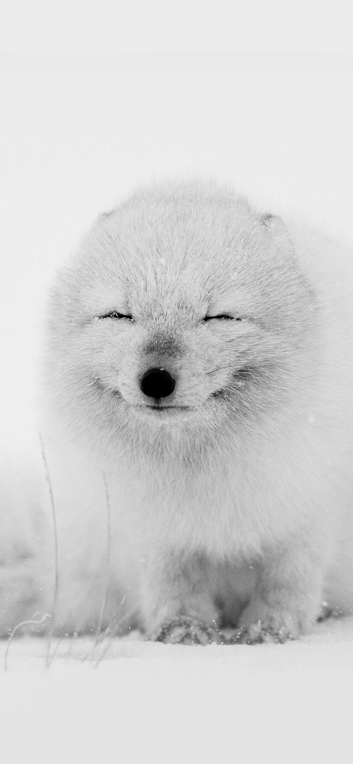 Arctic Fox Happy Moment Iphone X Wallpaper Iphone X Wallpapers
