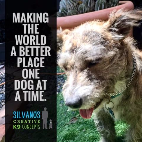 Silvano S Creative K9 Concepts Dogs Puppies Dogs Puppies