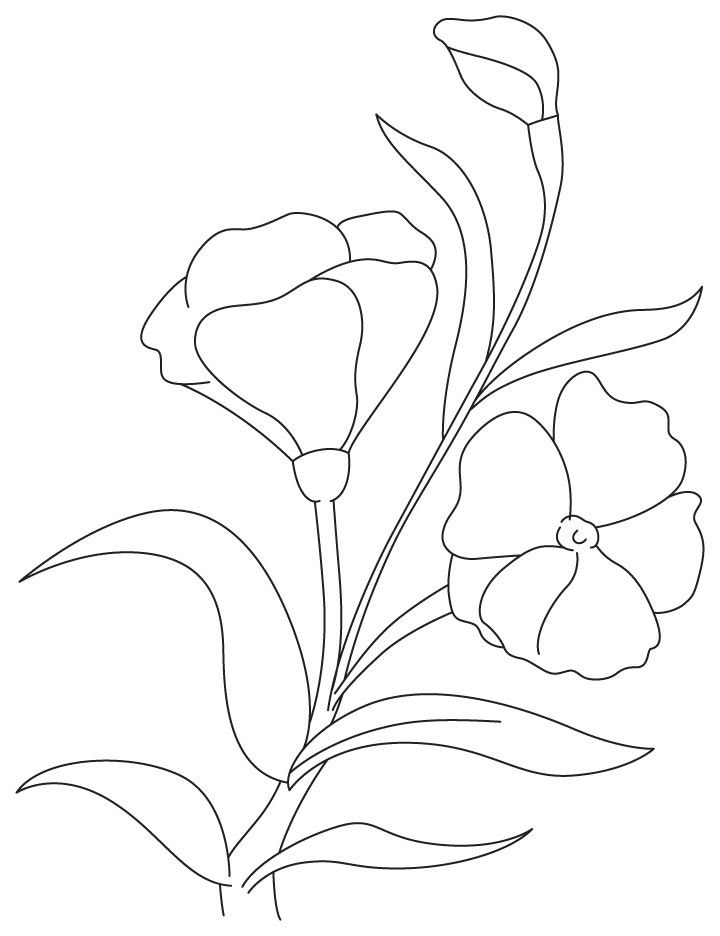 Purple Carnation Coloring Page Goruntuler Ile