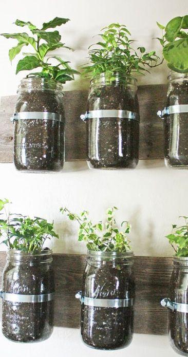 des plantes aromatiques en int rieur dans des bocaux diy. Black Bedroom Furniture Sets. Home Design Ideas