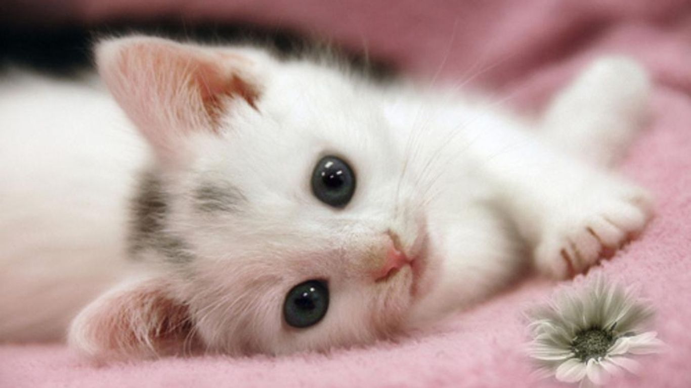 Collection Cute Kitten And Puppy Hd Wallpapers