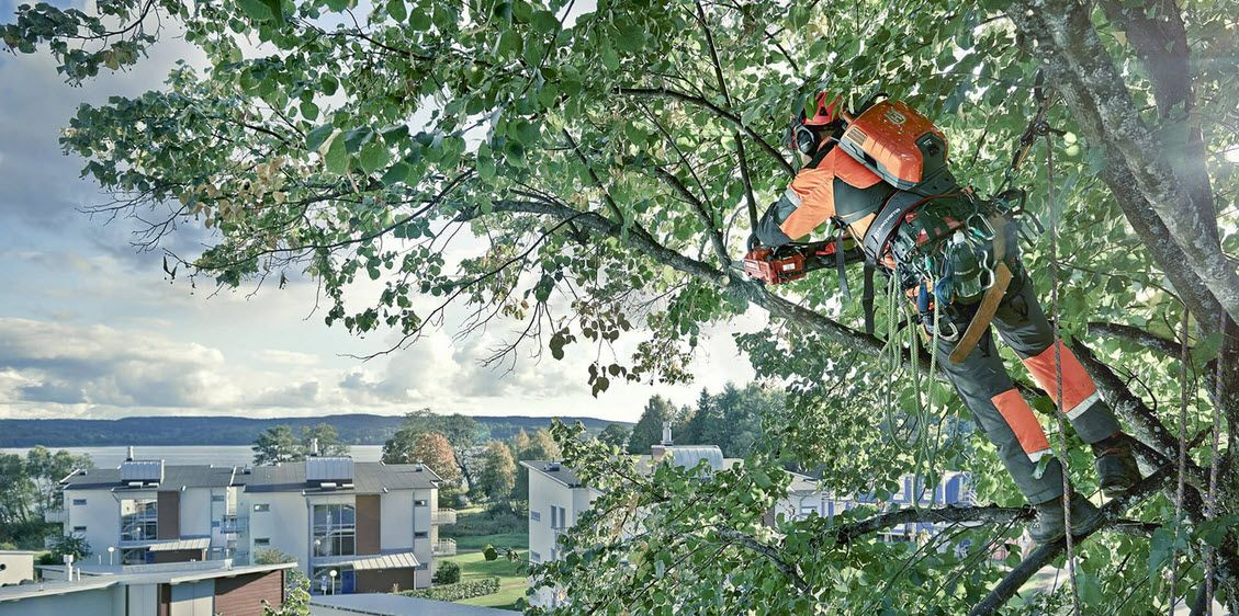 Tree trimming Sydney services are meant to help trees