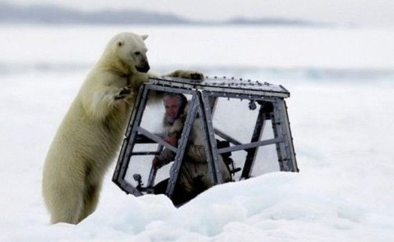 Discovery bait! Photographer being attacked from the top of the cage to hungry polar bears were approaching suddenly