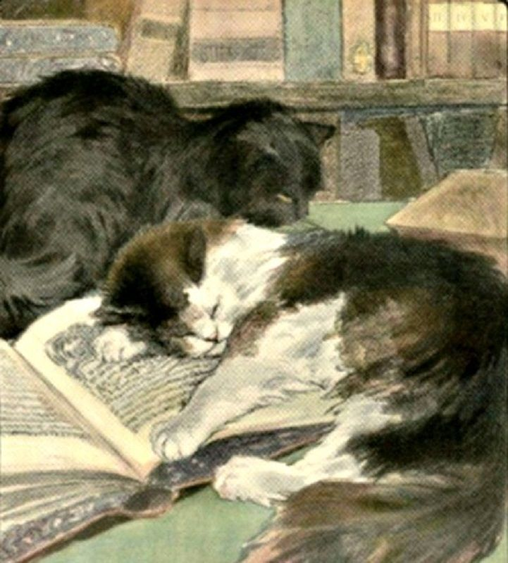 Books & cats.....