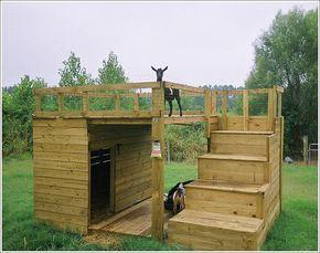 nigerian dwarf goat towers - Google Search