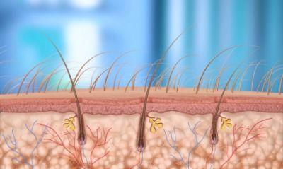 Resultado de imagen de pelo vellus