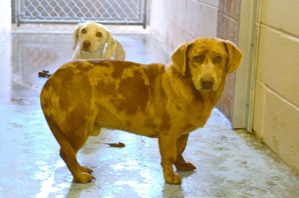 Golden Retriever Puppies Riverside County Ca 2021