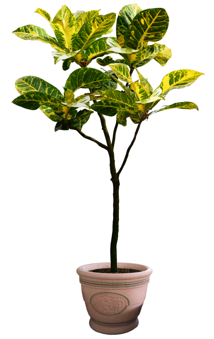 Plant Png 5 By Digitalwideresource